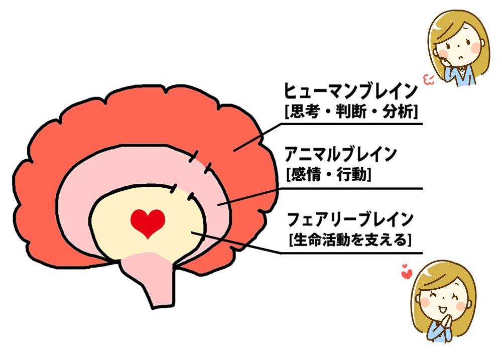 脳の構造は3段階