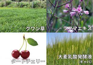 クワン草・タートチェリー・ラフマエキス・大麦乳酸発酵液