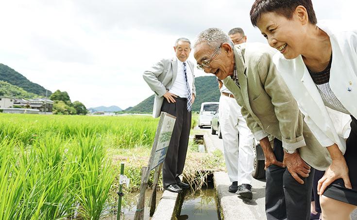 岡山県の田んぼを見る木村さん