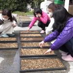 自然農通信-籾まき編-